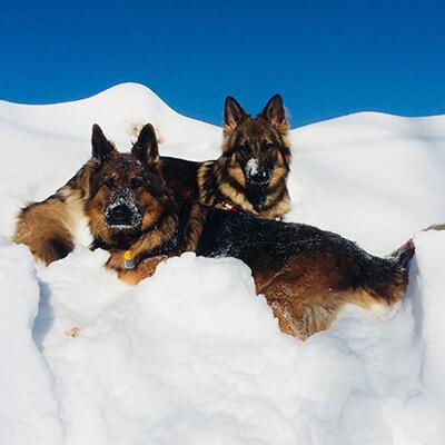 Chaika & Sibi